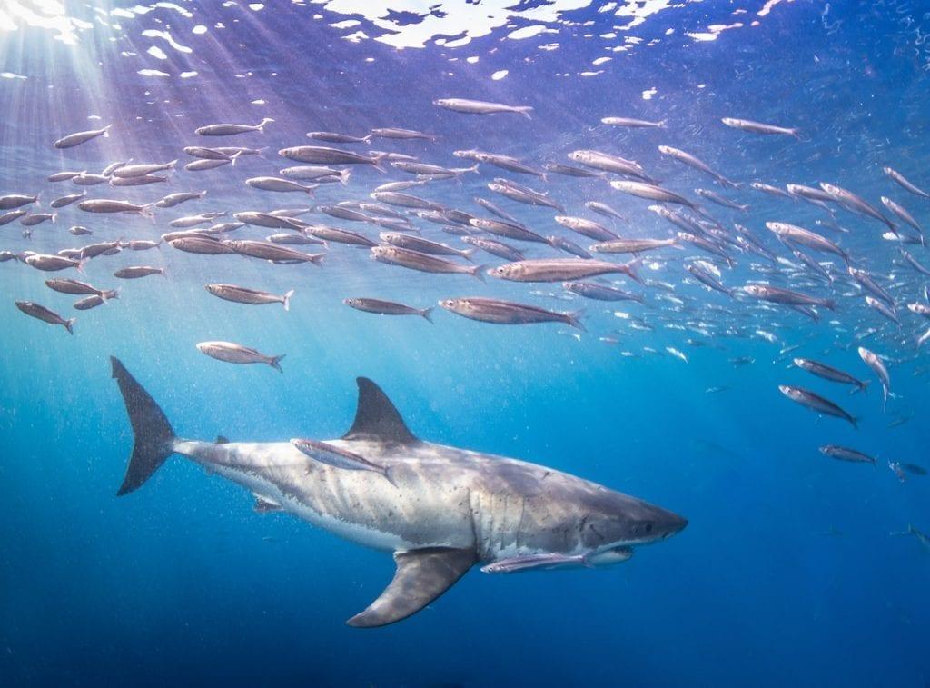 Fish amongst Sharks Skateboarding Industry Perspective